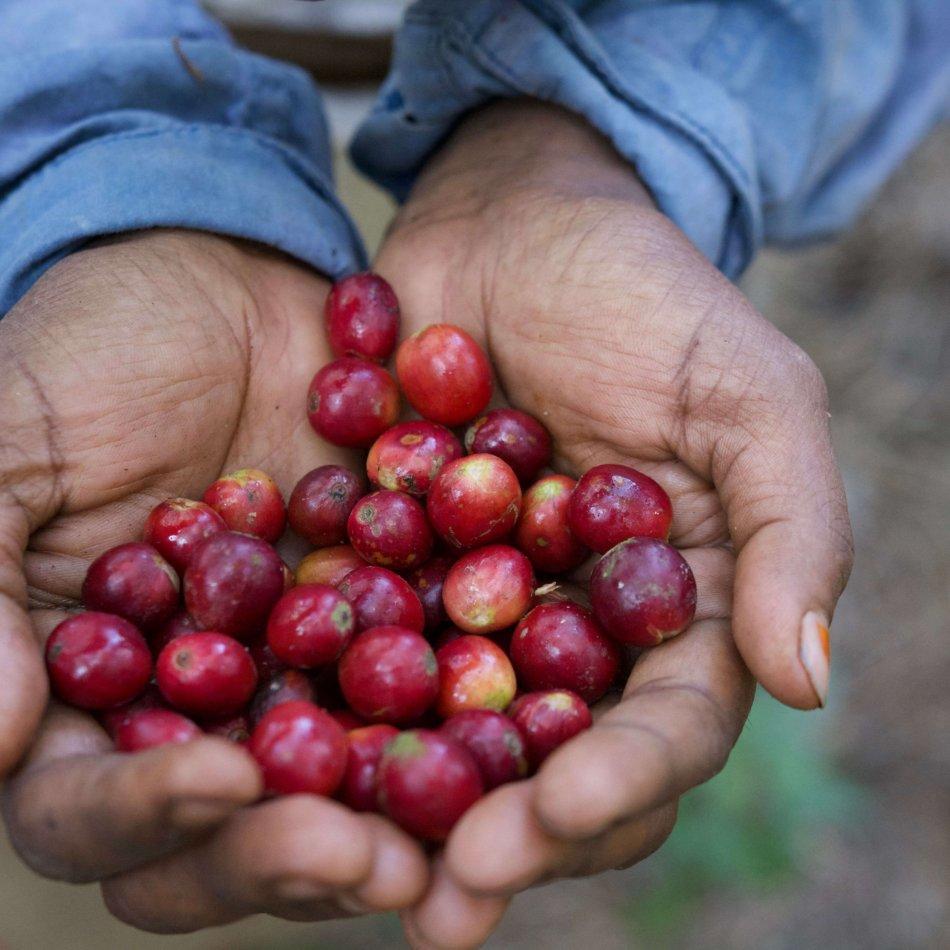 Nachhaltigkeit Fairtrade